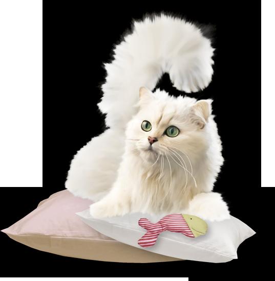 клипарт рисованная белая кошка