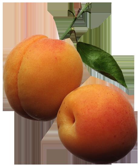фрукты клипарт персик