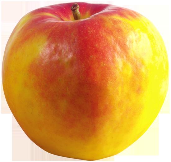 фрукты клипарт яблоко