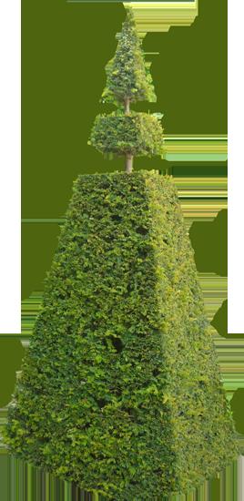 клипарт кусты деревья