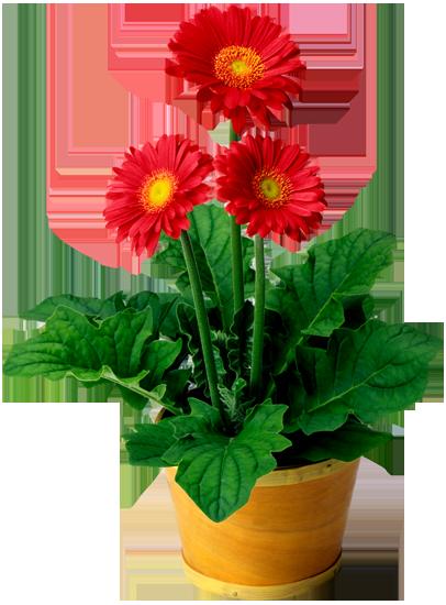 клипарт цветы в горшках