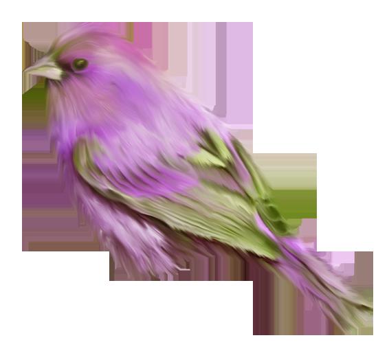 рисованные птицы клипарт