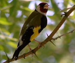 жизнь птиц