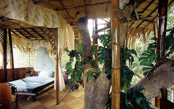 Green Magic Treehouse Resort
