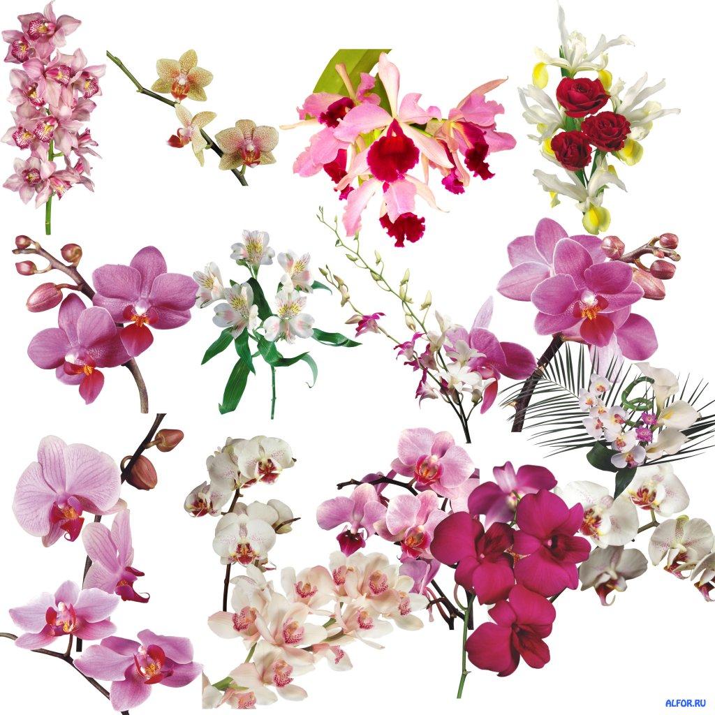 1273816377_orhidei